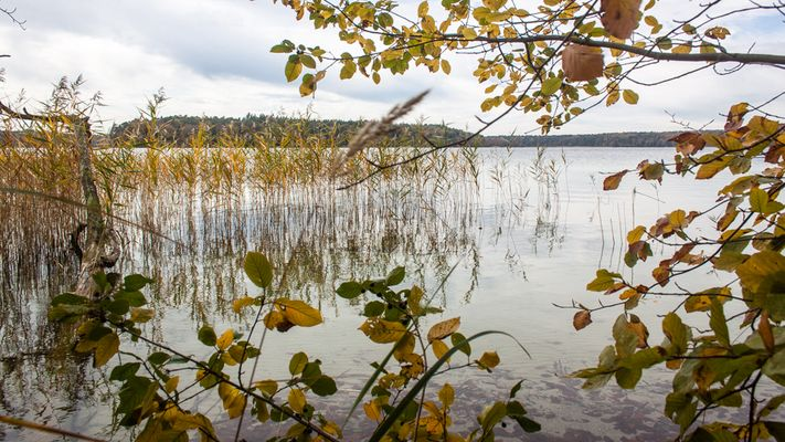 Stechlinsee im Herbst [2]