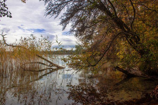 Stechlinsee im Herbst [3]