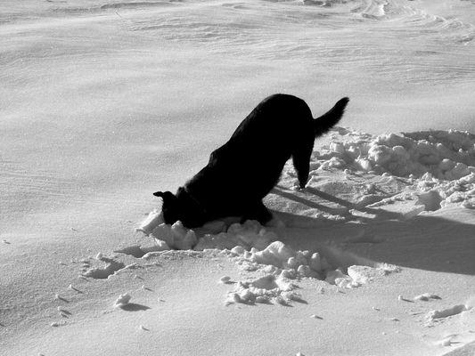 Steck den Kopf nicht in den Sand