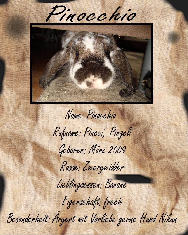 steckbrief pinocchio foto bild tiere haustiere