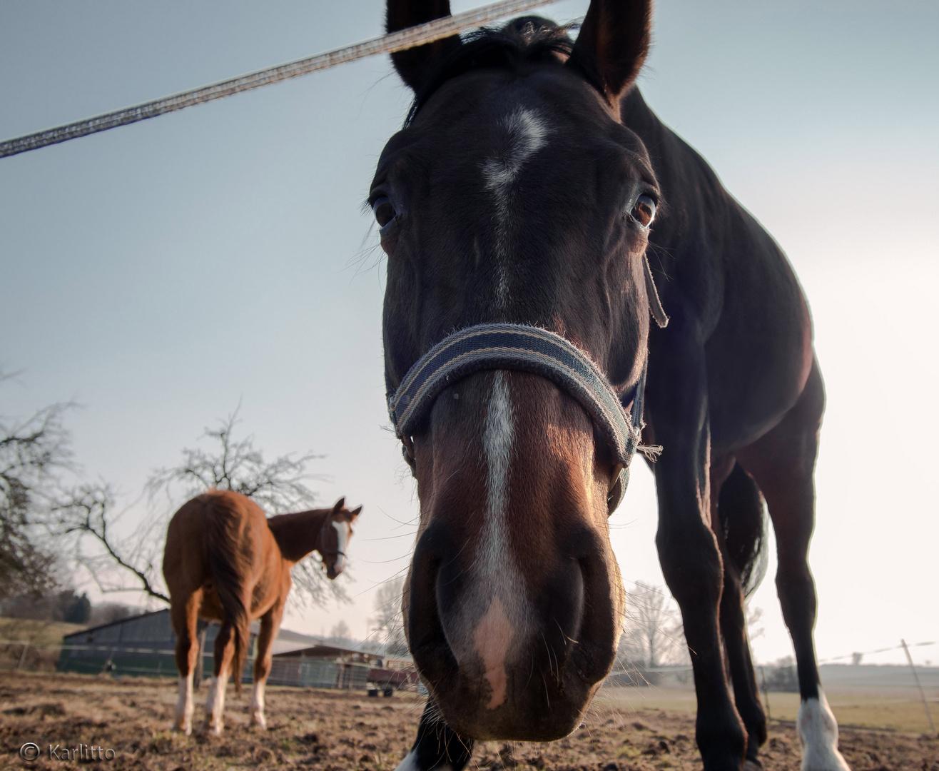 Steht ein Pferd ...