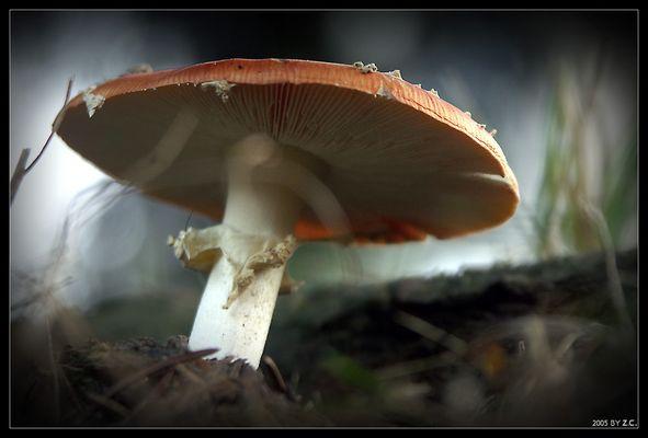 ...steht im Walde, ganz still und stumm!