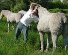Steifes Pferd