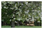 Steigerwälder Frühling (I)