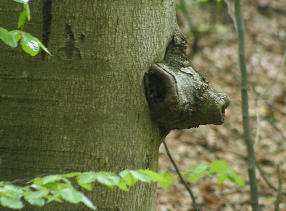 Steigerwaldbär
