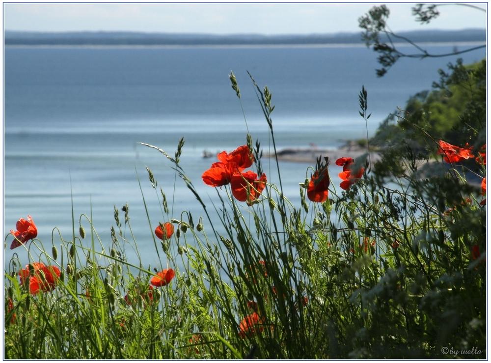 Steilküste bei Arkona 2