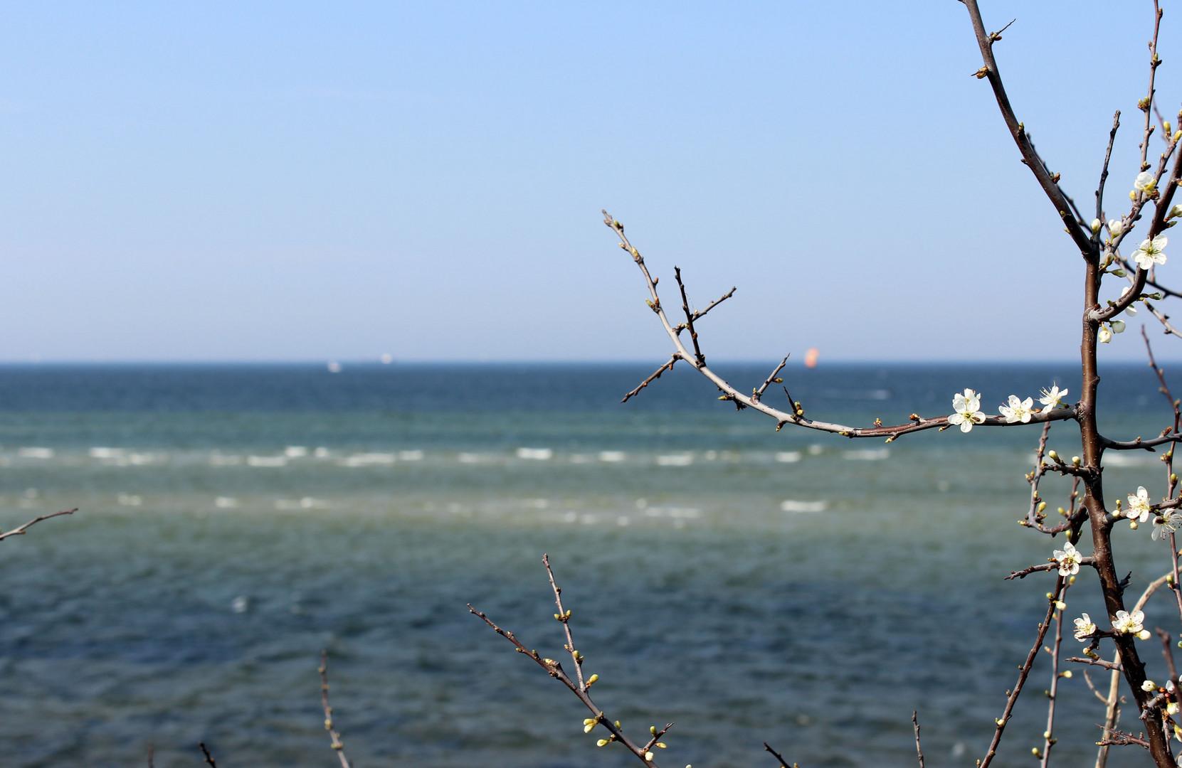 Steilküste in Stein bei Kiel