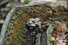 Steilkurven Pilze