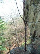 Stein gegen Baum