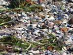 Stein unter Steinen