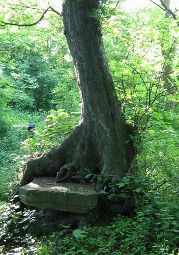 Steinaltar mit Baum verwachsen