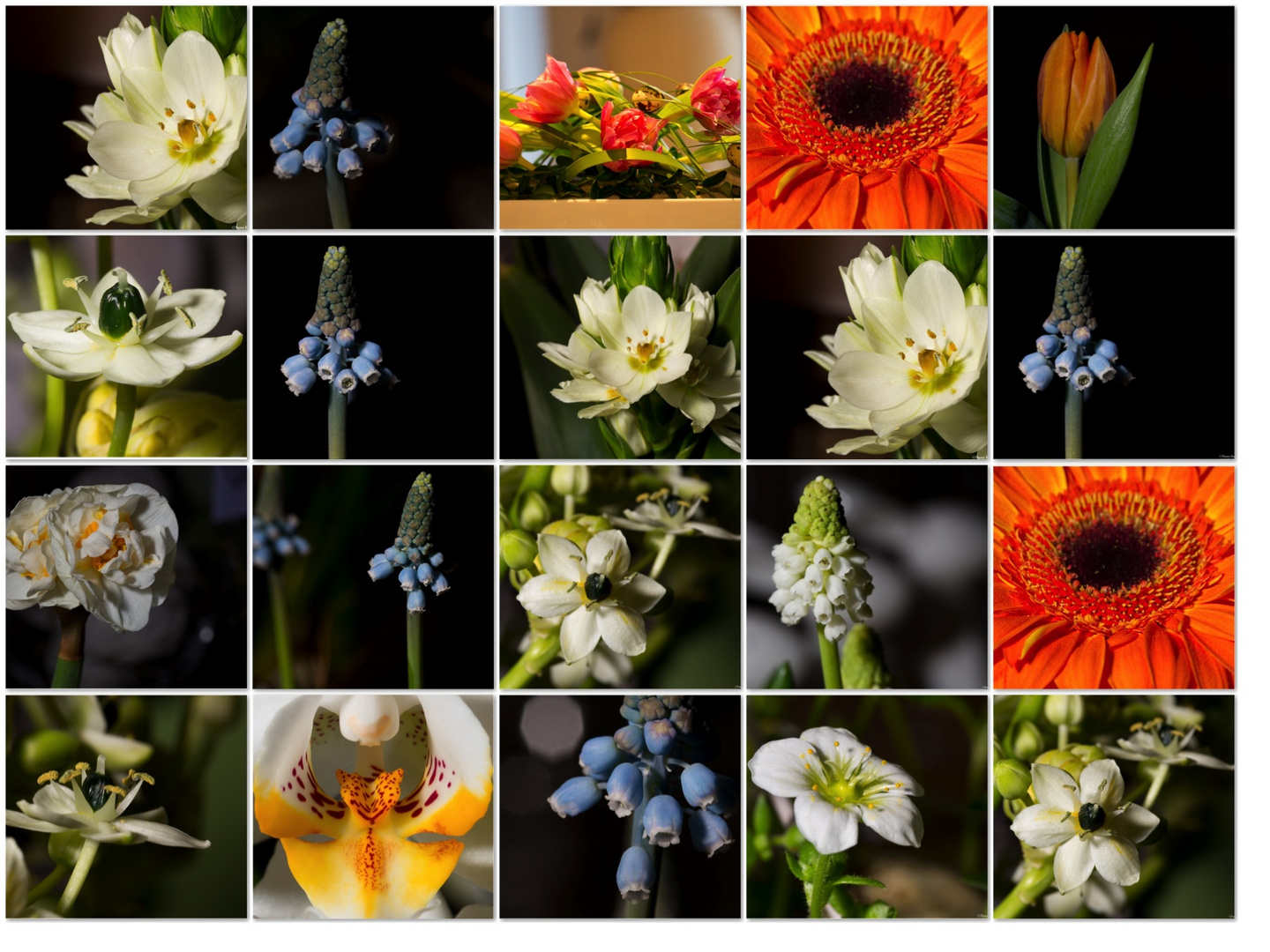 Steinblumen Collage.