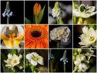 Steinblumen Collage..