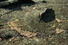 Steinchen mit Kuegelchen.