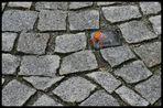 Steine, die einem in den Weg gelegt werden