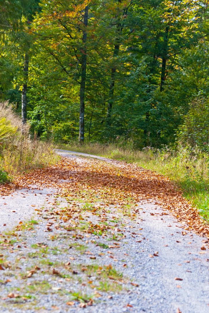 Steine erzählen Geschichten (Erlebnistour) - Der Herbst-