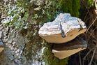 Steine erzählen Geschichten (Erlebnistour) -Der Pilz-