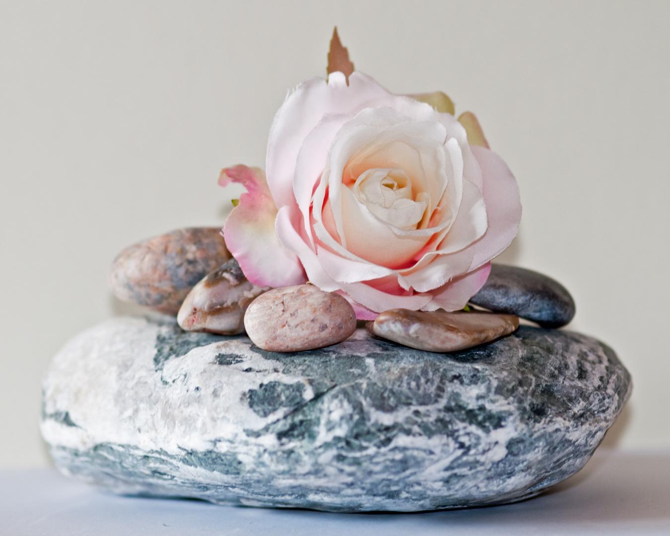 Steine + Rose