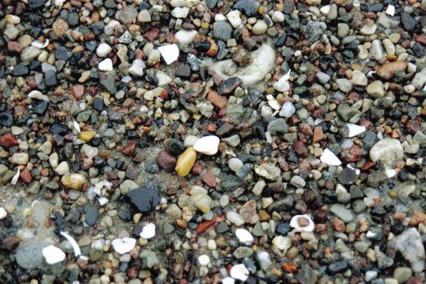 Steine und Muscheln am Strand