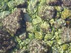 Steine unter der Wasseroberfläche