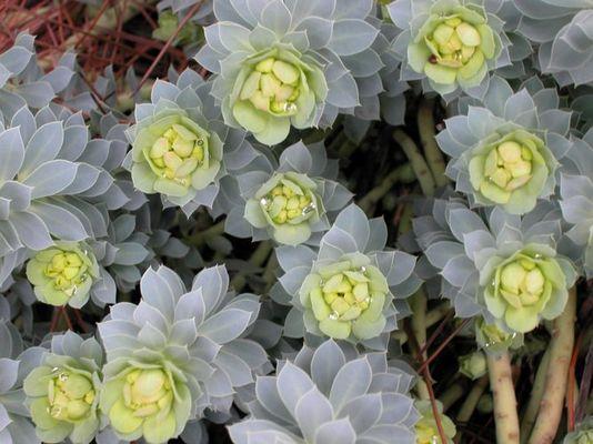 Steinerne Blumen!