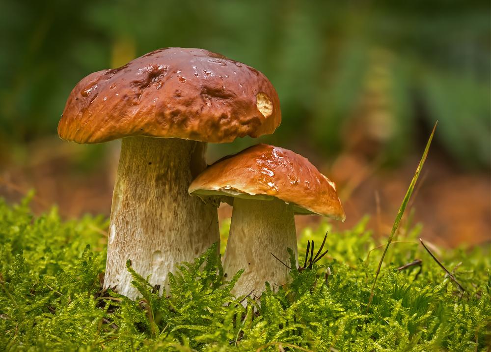 Steinerne Pilze