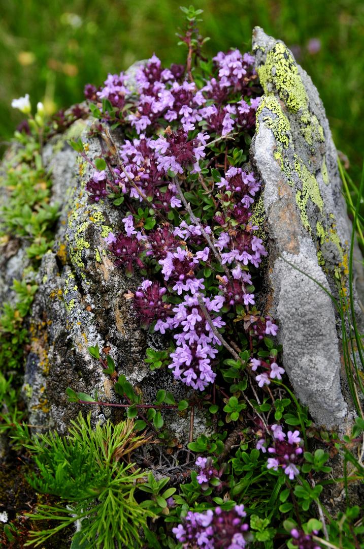 Steingarten im Nationalpark