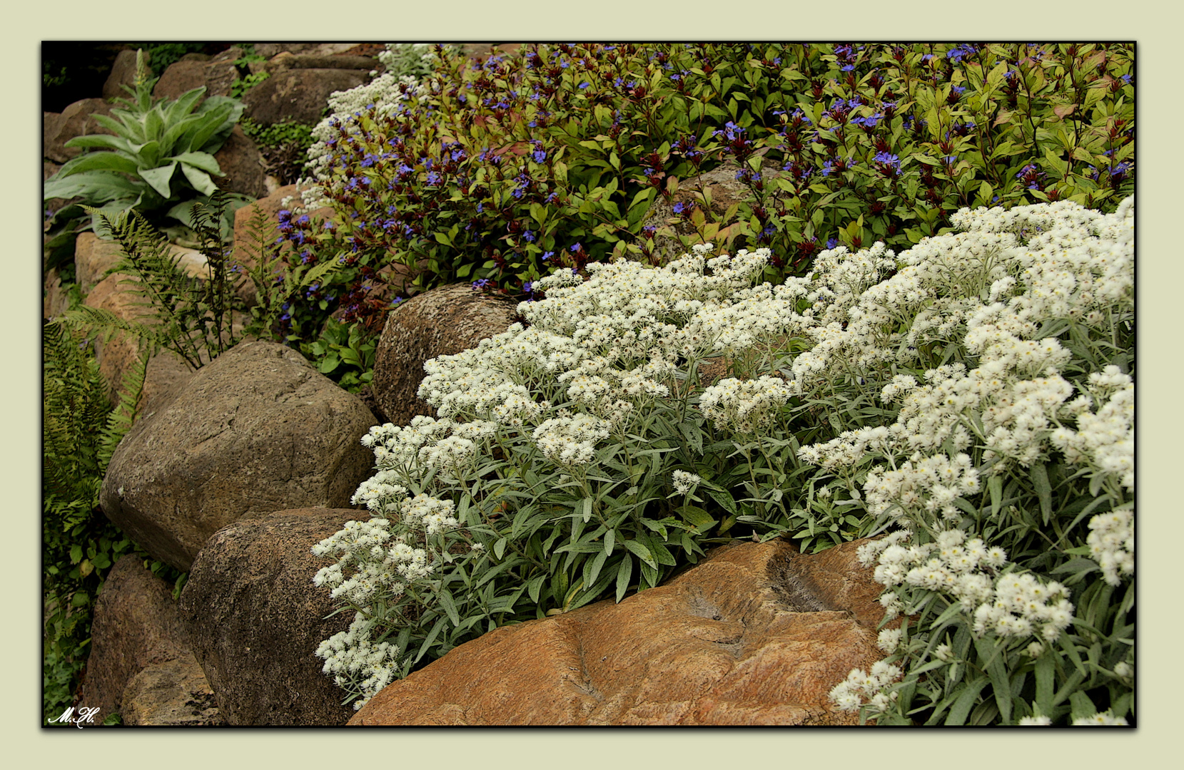 steingartenpflanzen foto bild pflanzen pilze flechten bl ten kleinpflanzen. Black Bedroom Furniture Sets. Home Design Ideas