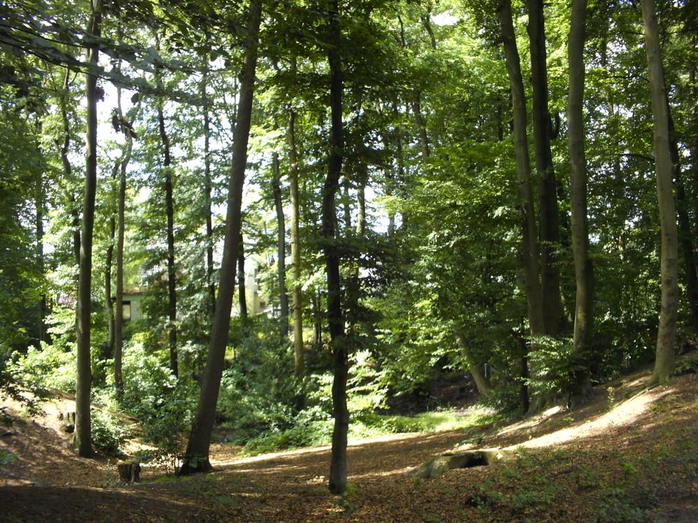 Steinhagener Wald