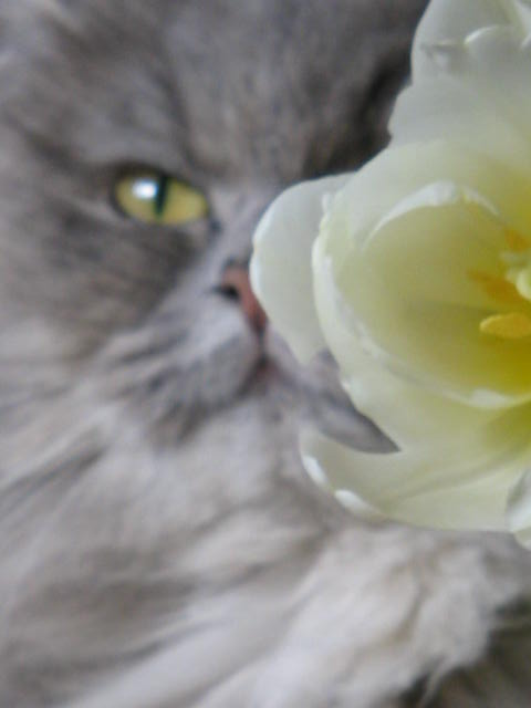Stella die Schöne