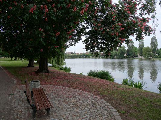 Stendaler Stadtsee