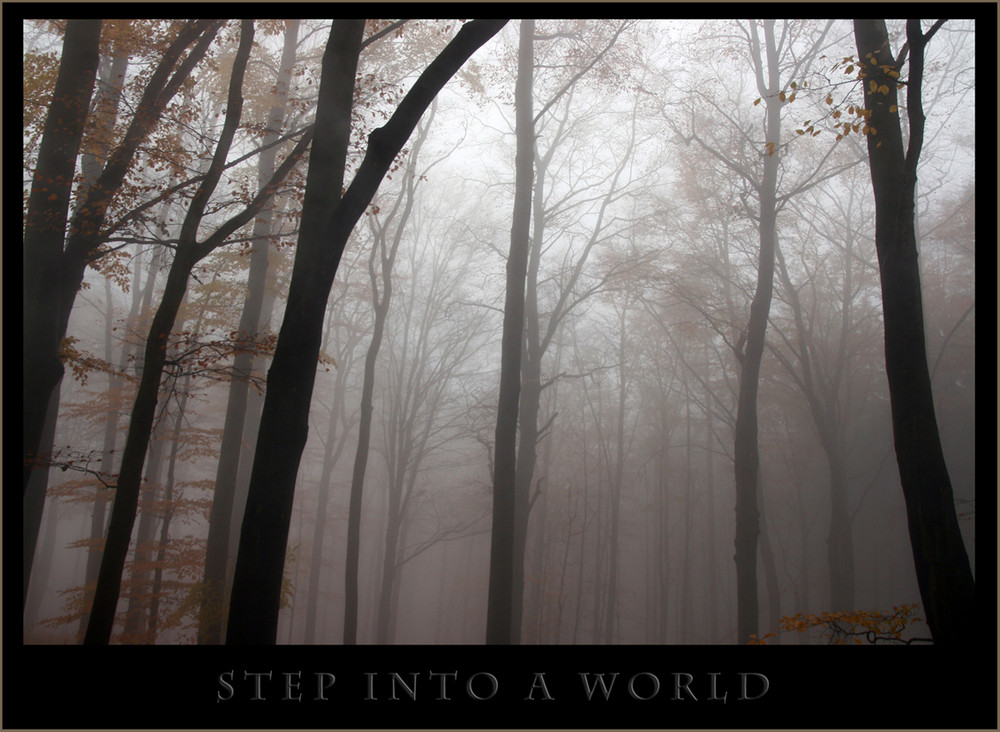 step into a world