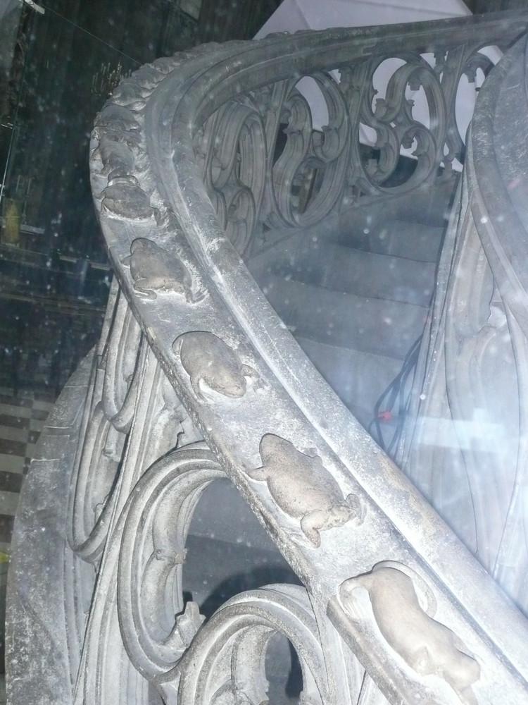 Stephansdom-Krötenwanderung