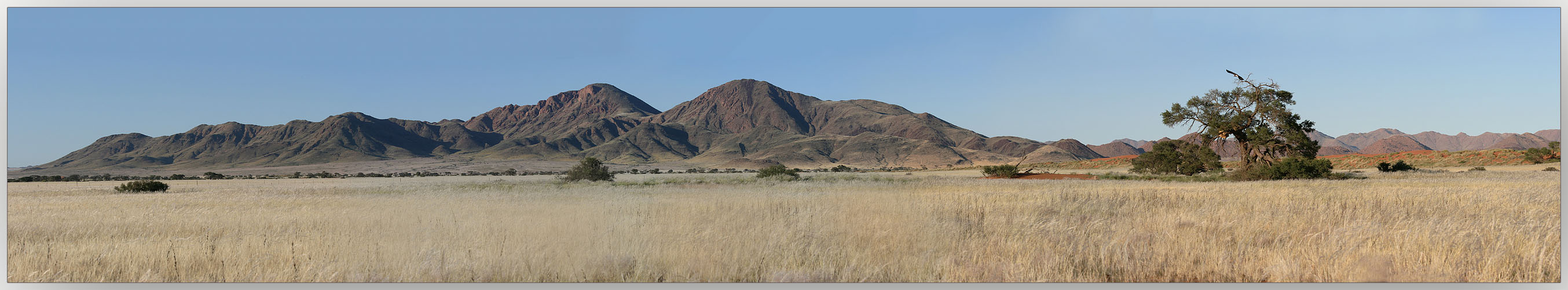 Steppe in Namibia