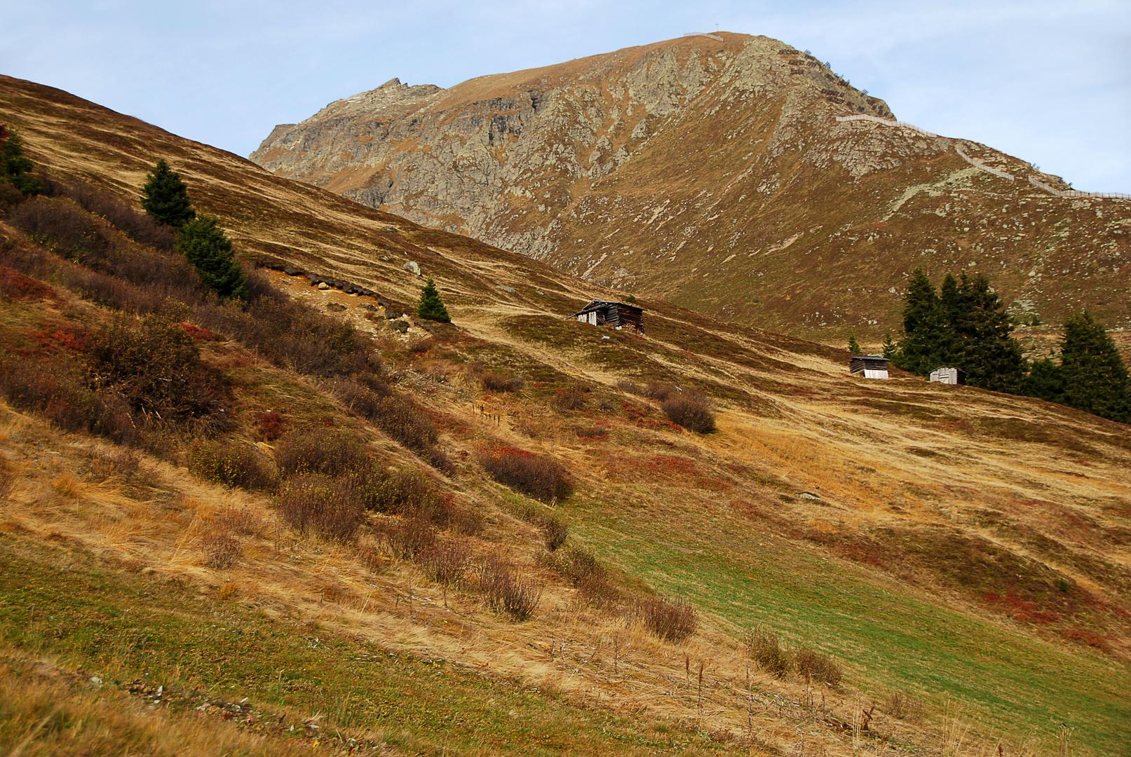 Steppe oder Bergwiese