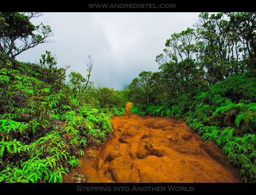 Stepping into another World - Alaka'i Swamp Trail - Kauai, HI