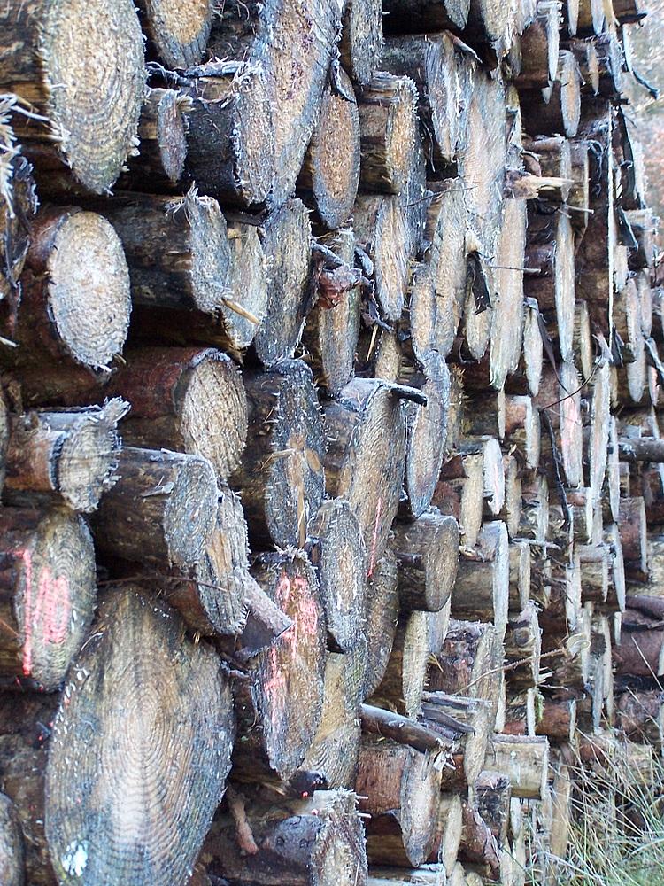 Ster Holz