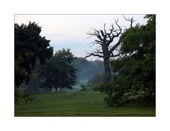 Sterbende Bäume..