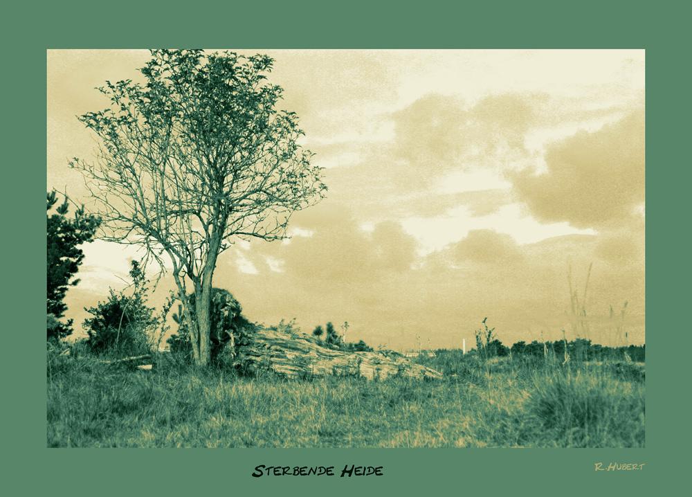 Sterbende Heide