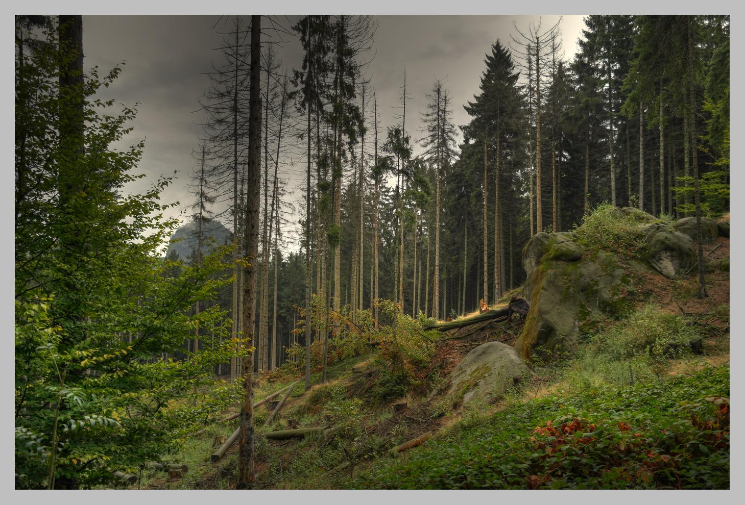 """Sterbender """" Deutscher """" Wald"""