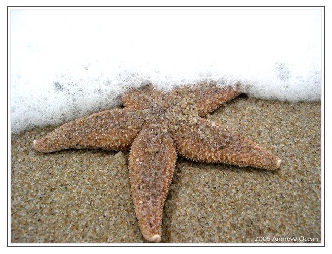 Sterne gibt es nicht nur im Himmel...