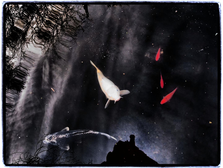 Sterne / Himmel / Fische