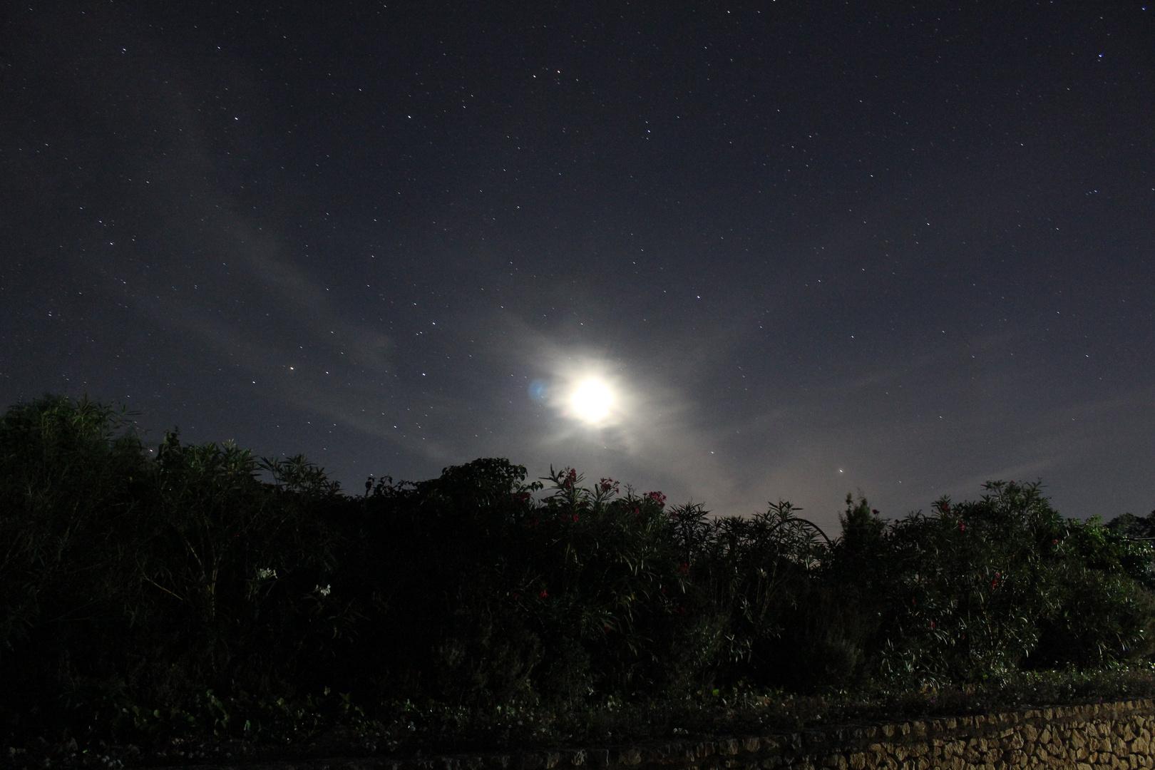 Sternenhimmel und Mond über Oleander