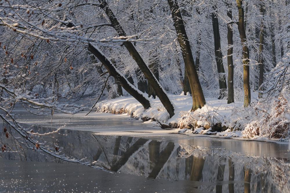 Stever im Winter
