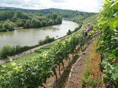 Stgt Weinbau Neckar Aug17