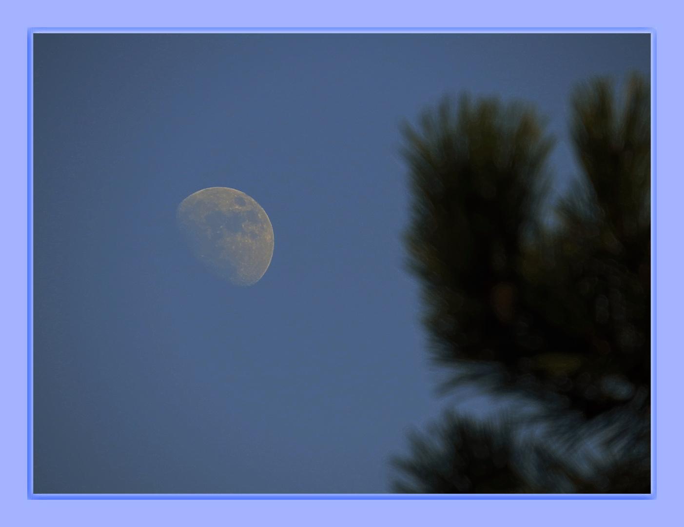 stieg aus dem Bus und sah gestern diesen 16.30 Uhr Mond,