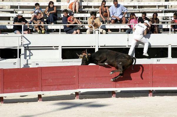Stierkampf in Arles #5 - rettender Sidestep