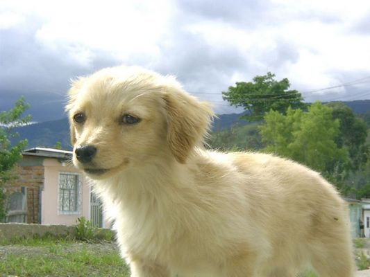 Still a dog / un perro, aún