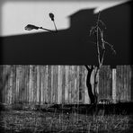 Still life with the fence