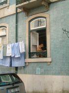 Still lifes with Dog, Car and Clothe Line, Lisbon